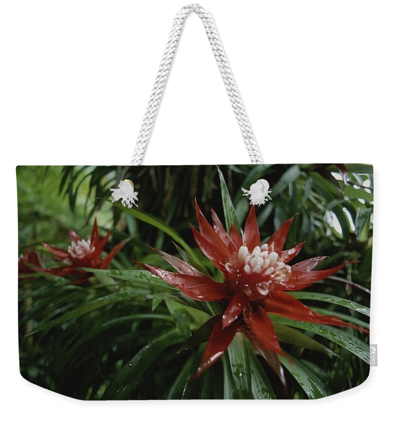 Atlantic Islands Weekender Tote Bag featuring the photograph A Close View Of A Tropical, Red Flower by Michael Melford