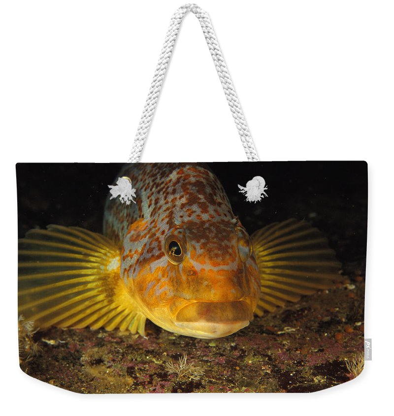 North America Weekender Tote Bag featuring the photograph A Close View Of The Face Of A Member by Bill Curtsinger
