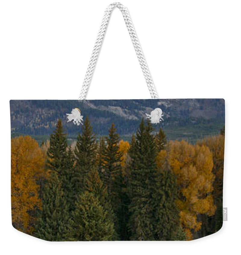 Grand Teton National Park Weekender Tote Bag featuring the photograph A Cow Moose Enjoys Breakfast by Drew Rush