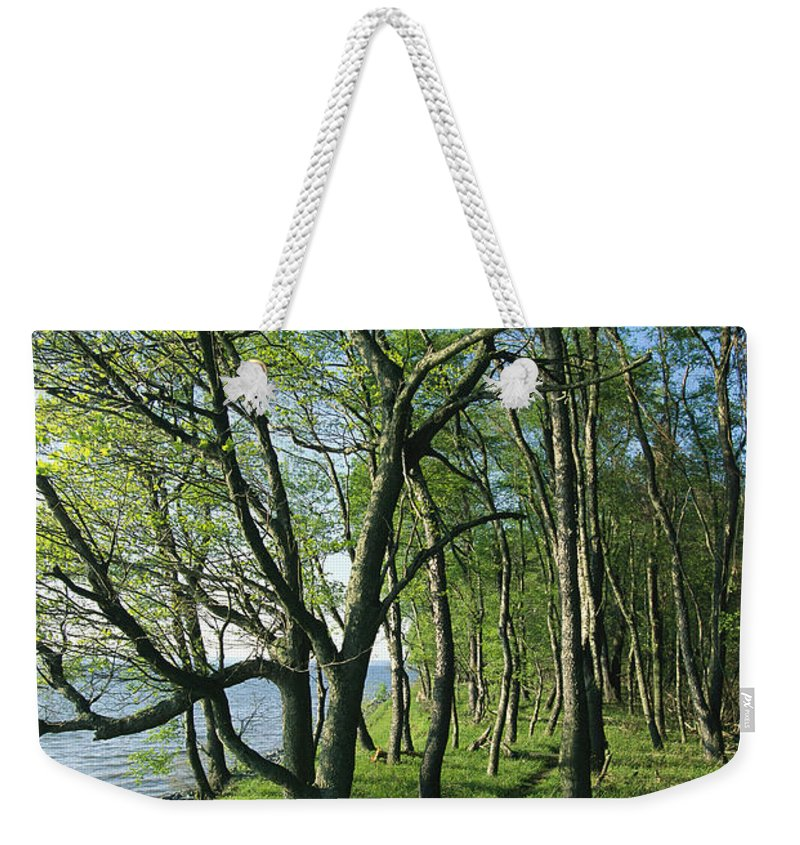 North America Weekender Tote Bag featuring the photograph A Dirt Path Winds Through A Waterside by Skip Brown