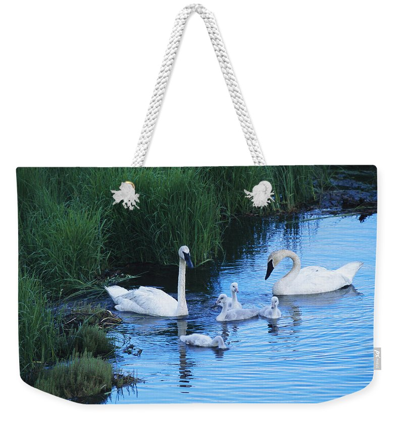 Animals Weekender Tote Bag featuring the photograph A Family Of Trumpeter Swans Swims by Melissa Farlow