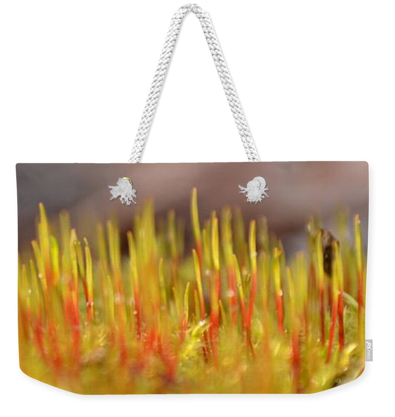 Moss Weekender Tote Bag featuring the photograph A Forest Of Moss by JD Grimes