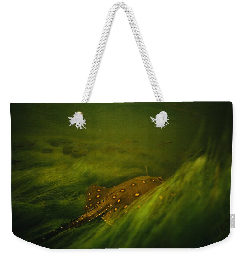 Underwater Weekender Tote Bag featuring the photograph A Freshwater Stingray Swims In A Meadow by Joel Sartore