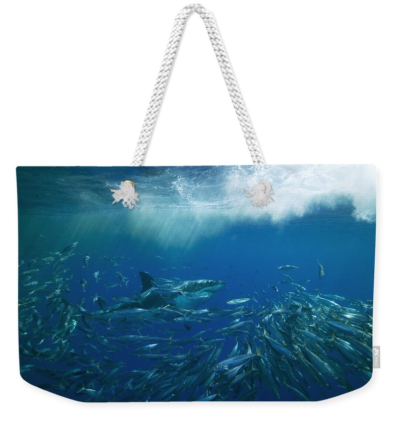 Color Image Weekender Tote Bag featuring the photograph A Great White Shark Swims Close by Mauricio Handler
