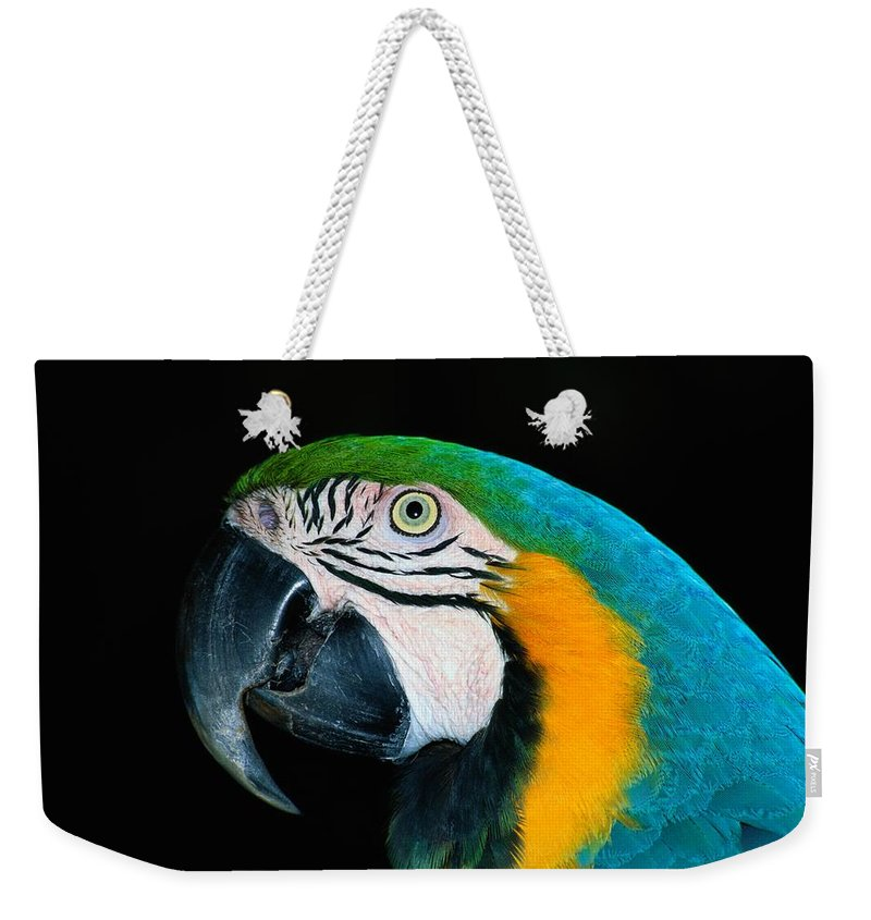 south America Weekender Tote Bag featuring the photograph A Head-only View Of A Captive Blue by Tim Laman
