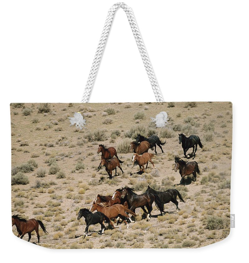 Animals Weekender Tote Bag featuring the photograph A Herd Of Wild Horses Gallops by Melissa Farlow