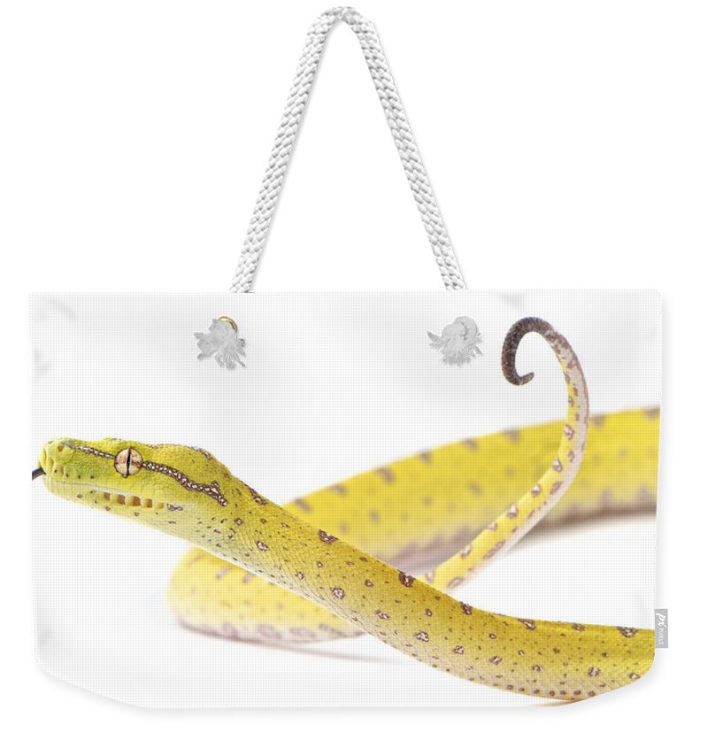 Photography Weekender Tote Bag featuring the photograph A Juvenile Green Tree Python Sits Alert by Brooke Whatnall