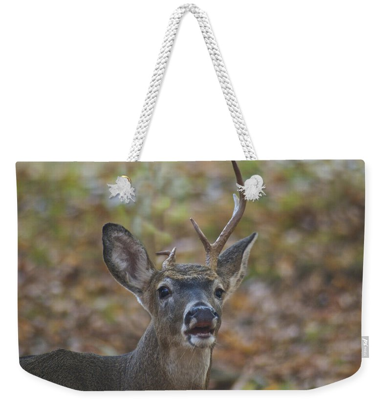Whitetail Weekender Tote Bag featuring the photograph A Little Unbalanced by Michael Peychich