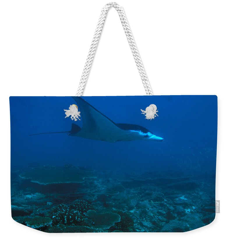 Phoenix Islands Weekender Tote Bag featuring the photograph A Manta Ray Swims Through The South by Nick Norman