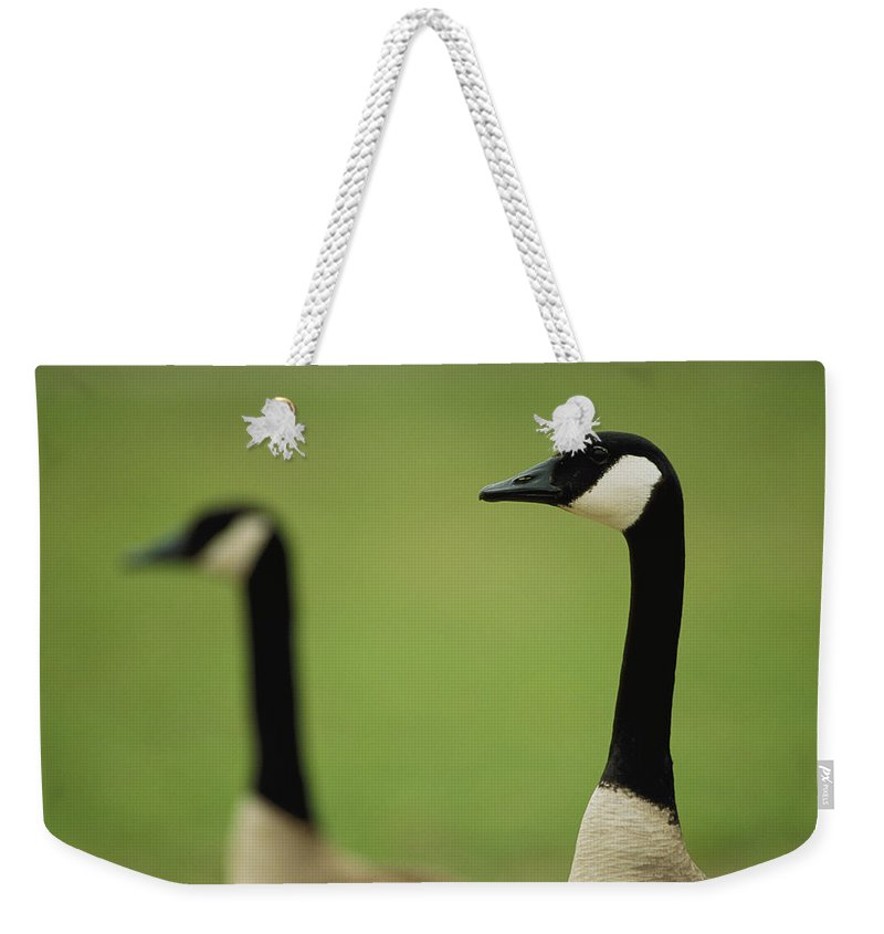 Animals Weekender Tote Bag featuring the photograph A Pair Of Canada Geese In Profile by Joel Sartore