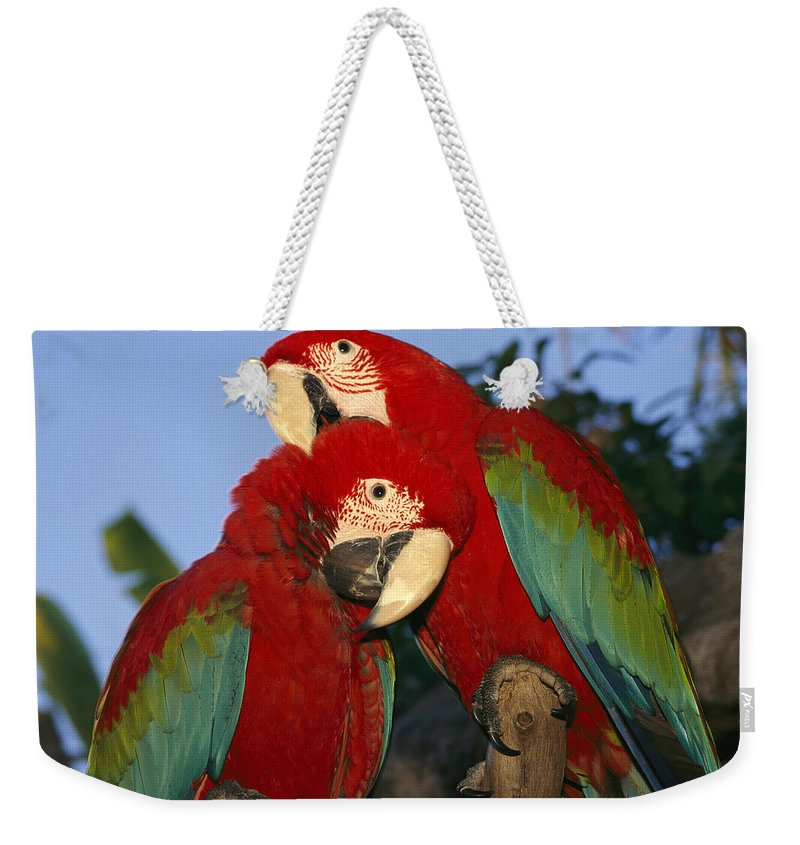 North America Weekender Tote Bag featuring the photograph A Pair Of Captive Red-and-green Macaws by Richard Nowitz