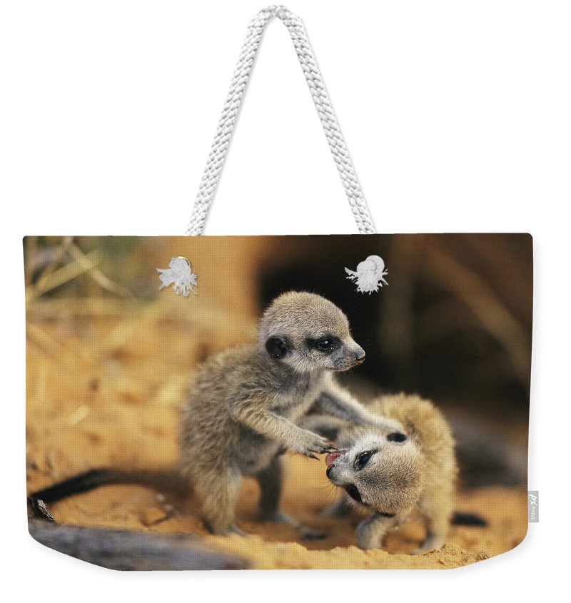 Africa Weekender Tote Bag featuring the photograph A Pair Of Four-week-old Meerkat Pups by Mattias Klum
