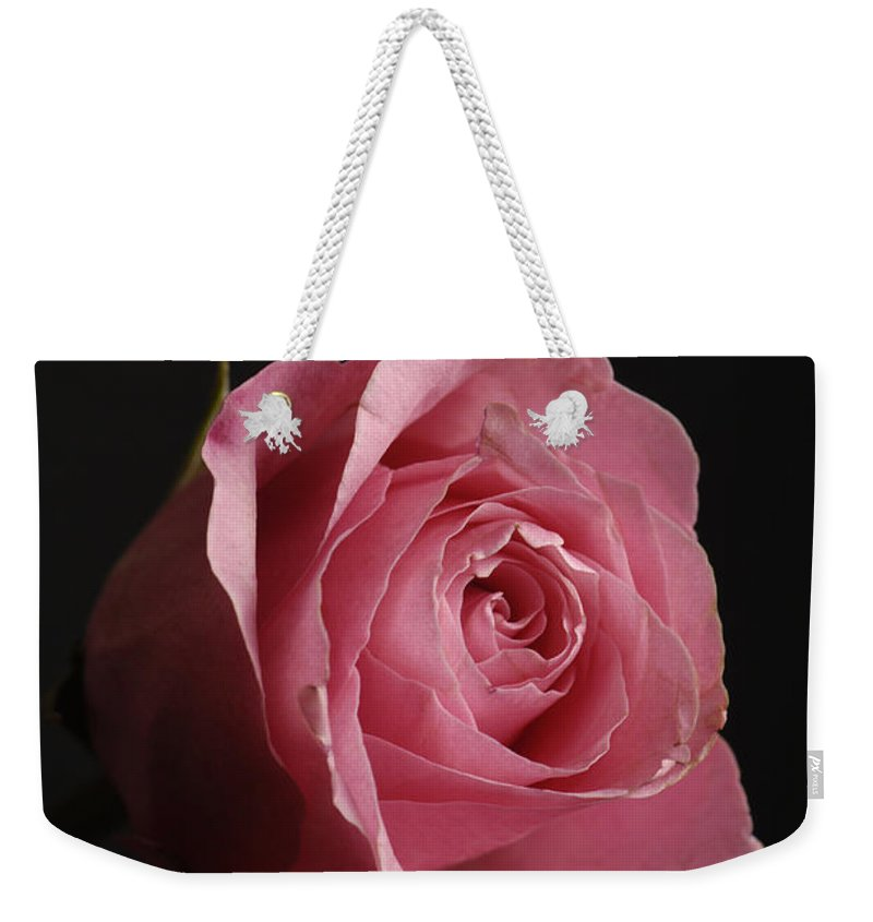 Photography Weekender Tote Bag featuring the photograph A Pink Rose Rosaceae by Joel Sartore