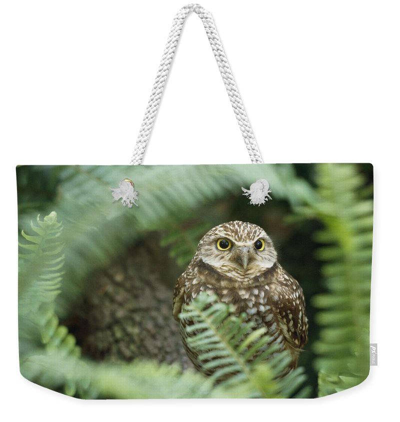 tampa Zoo Weekender Tote Bag featuring the photograph A Portrait Of A Captive Burrowing Owl by Norbert Rosing