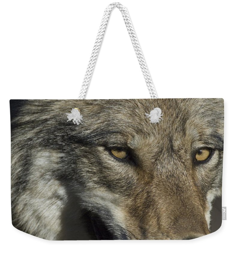 Day Weekender Tote Bag featuring the photograph A Portrait Of A Gray Wolf by Michael S. Quinton