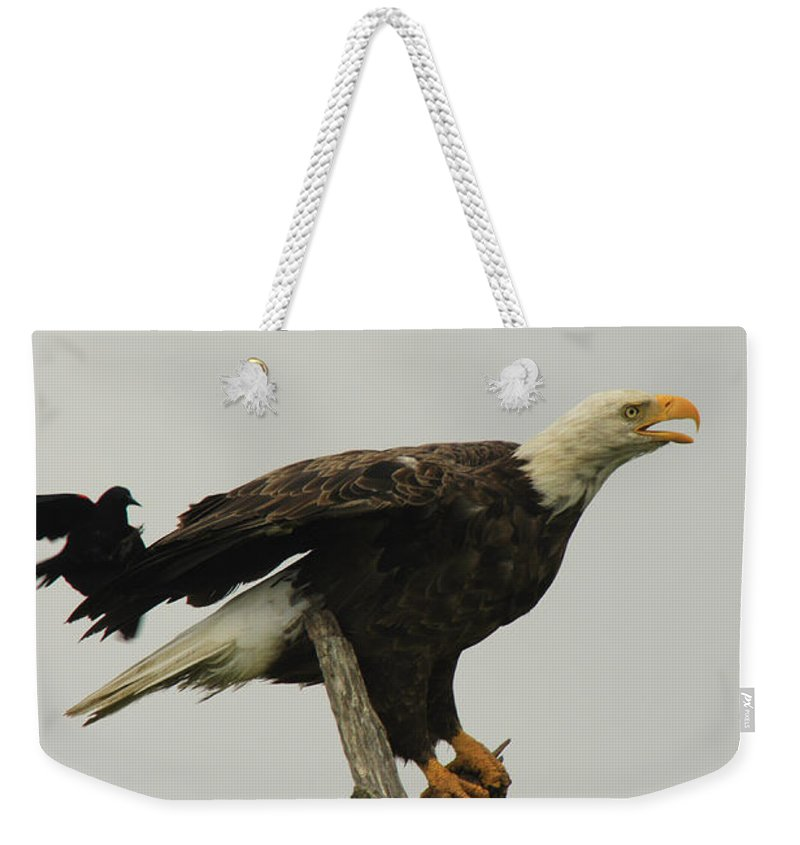 Cambridge Weekender Tote Bag featuring the photograph A Red Wing Black Bird Attacks A Bald by George Grall