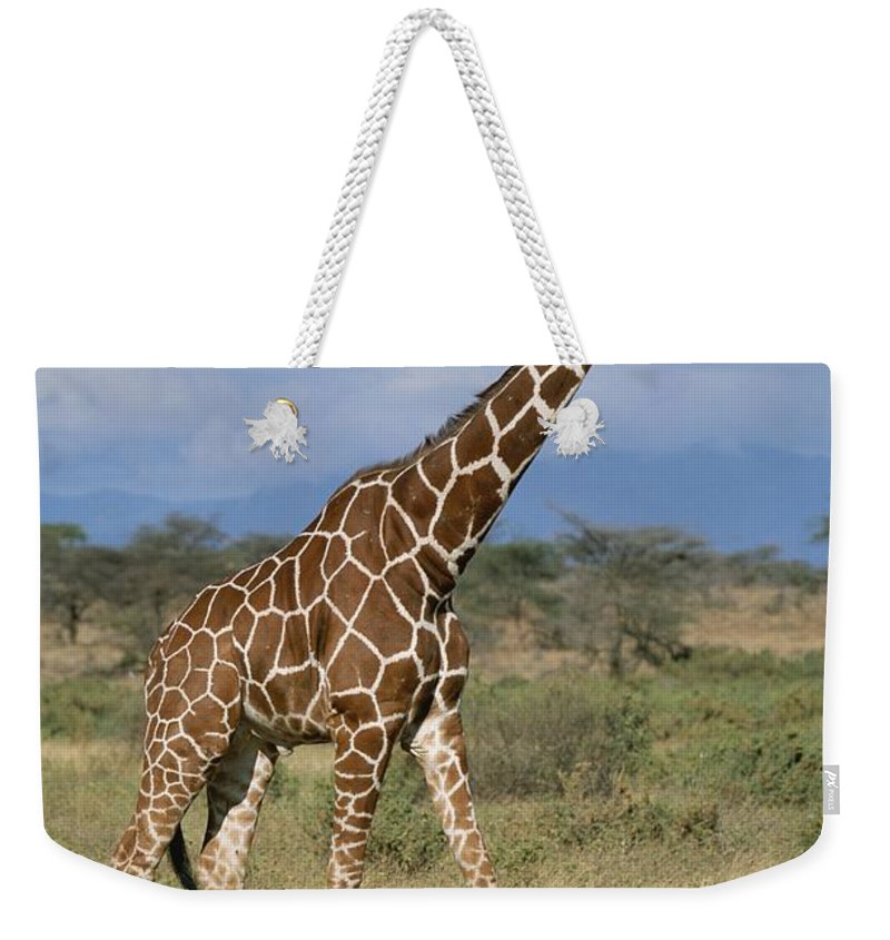 Africa Weekender Tote Bag featuring the photograph A Reticulated Giraffe On A Samburu by Roy Toft