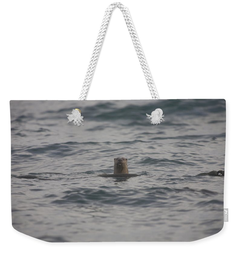 One Animal Weekender Tote Bag featuring the photograph A River Otter Sticks His Head by Taylor S. Kennedy