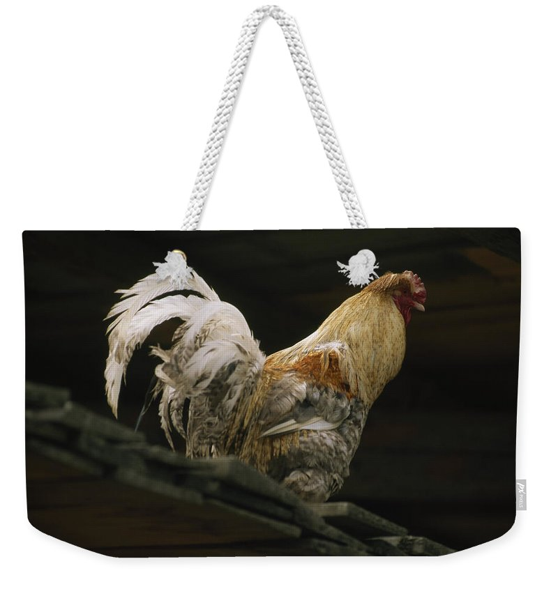 Lunang Valley Weekender Tote Bag featuring the photograph A Rooster Struts On A Wood Roof by Gordon Wiltsie