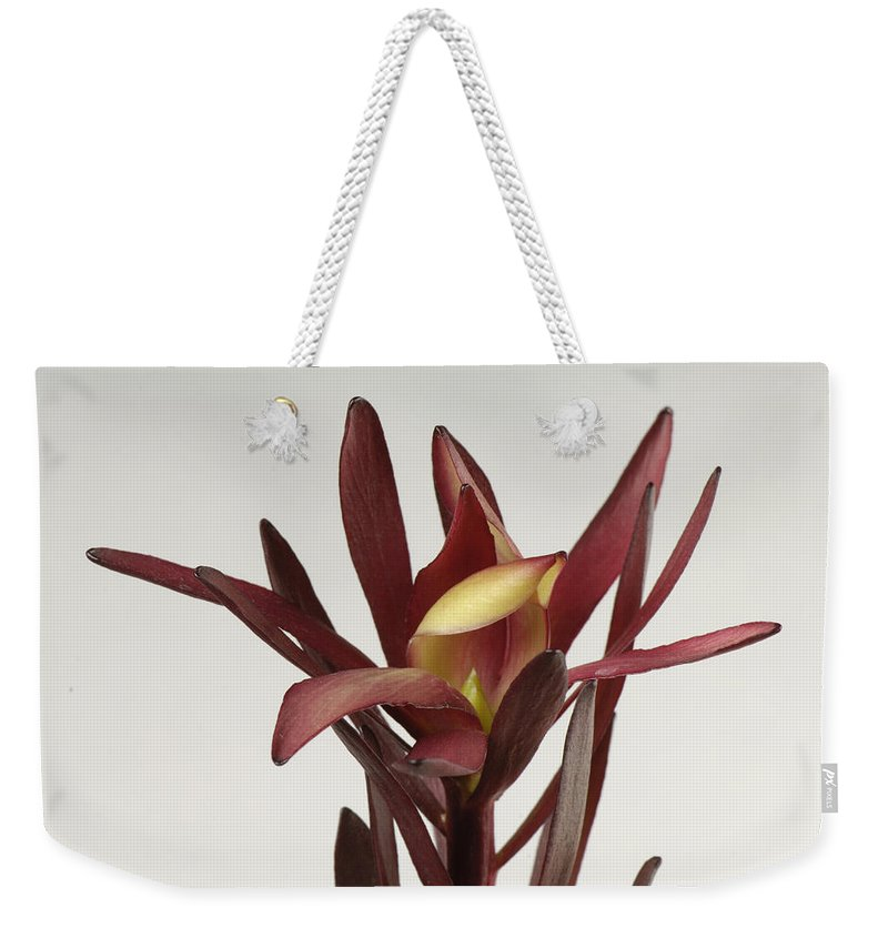 Photography Weekender Tote Bag featuring the photograph A Safari Sunset Flower Leucadendron by Joel Sartore