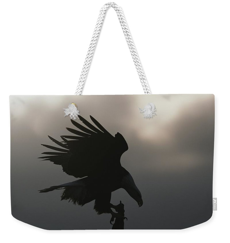 North America Weekender Tote Bag featuring the photograph A Silhouetted Northern American Bald by Norbert Rosing