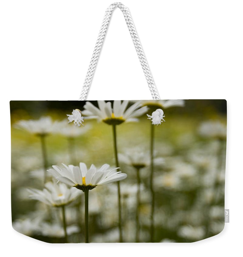 Jemez Mountains Weekender Tote Bag featuring the photograph A Small Group Of Daisies Stands by Ralph Lee Hopkins