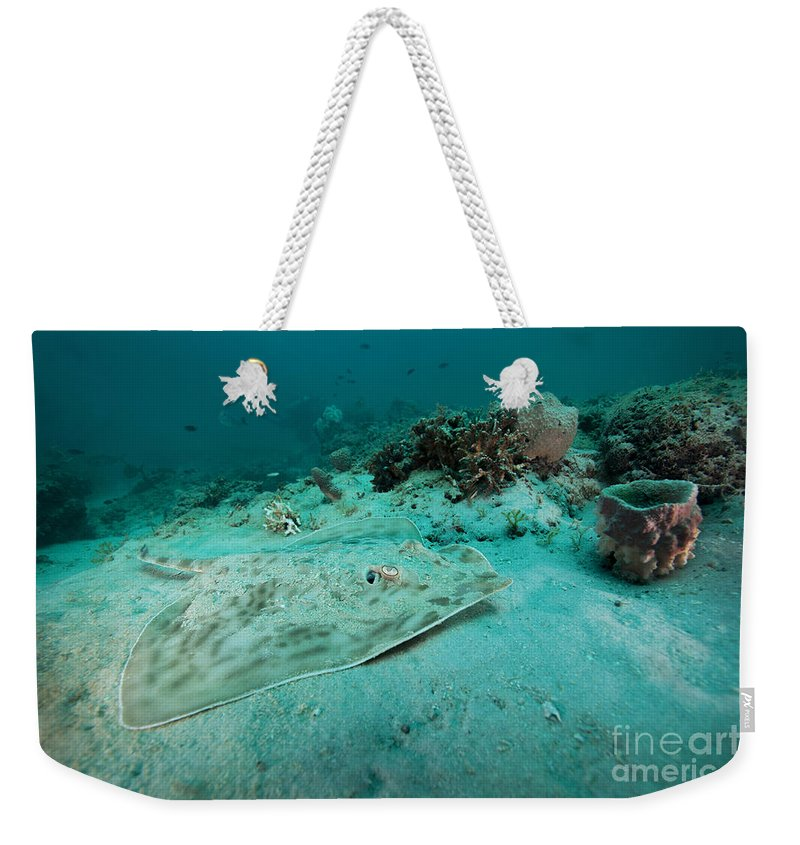 Sea Life Weekender Tote Bag featuring the photograph A Southern Stingray On The Sandy Bottom by Michael Wood