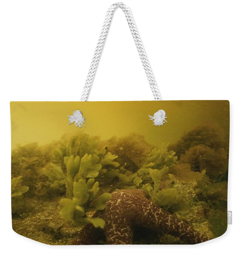 Underwater Weekender Tote Bag featuring the photograph A Starfish In Waters Clouded By A Red by Bill Curtsinger