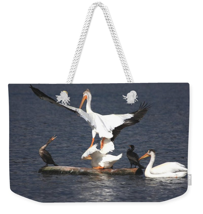 Pelican Weekender Tote Bag featuring the photograph A Step Ahead by Shane Bechler