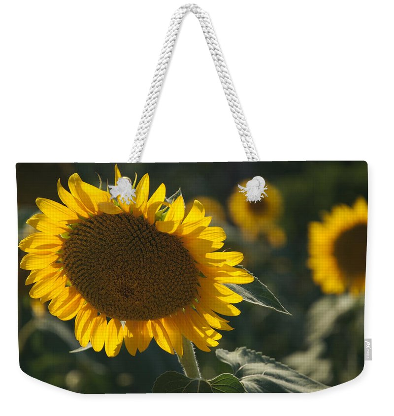 Nobody Weekender Tote Bag featuring the photograph A Sunflower Bows To Its Own Weight by Heather Perry