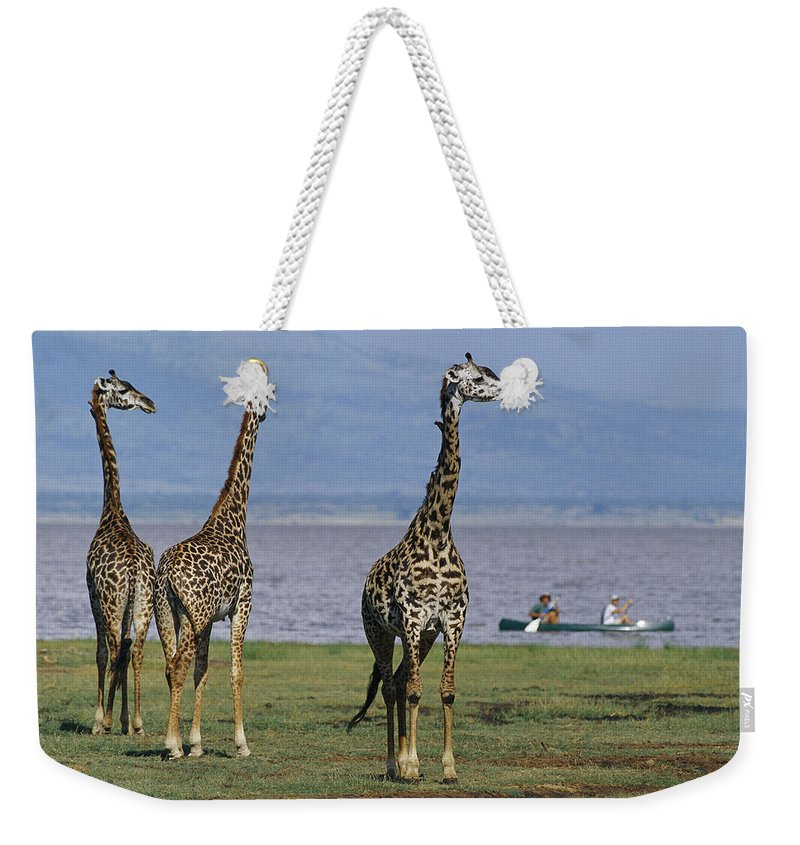 Africa Weekender Tote Bag featuring the photograph A Trio Of Giraffes Near The Edge by Richard Nowitz
