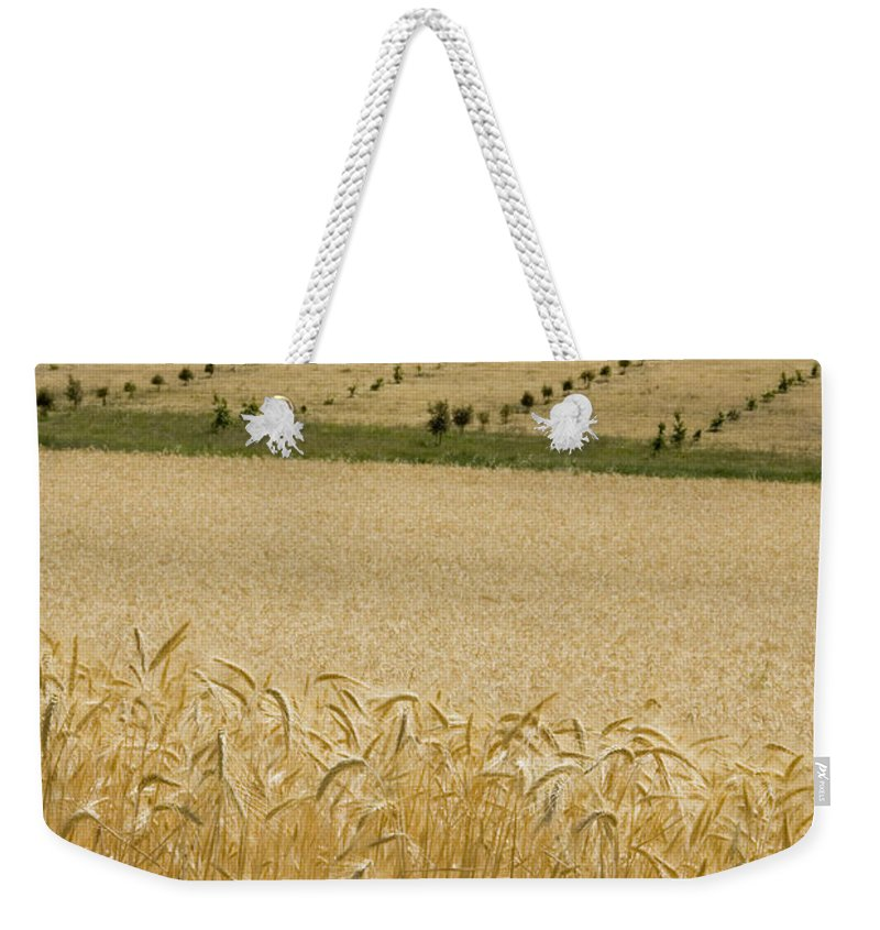 Wheat Weekender Tote Bag featuring the photograph A View Of A Summer Field Of Wheat by Stephen Sharnoff