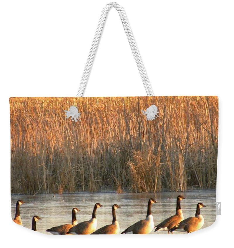 Canada Geese Weekender Tote Bag featuring the photograph A Walk In The Park by Peggy McDonald
