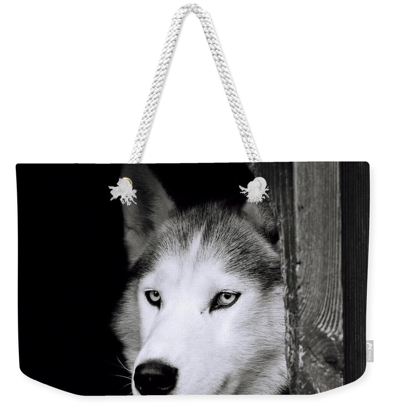 Dog Weekender Tote Bag featuring the photograph Confidence by Shaun Higson