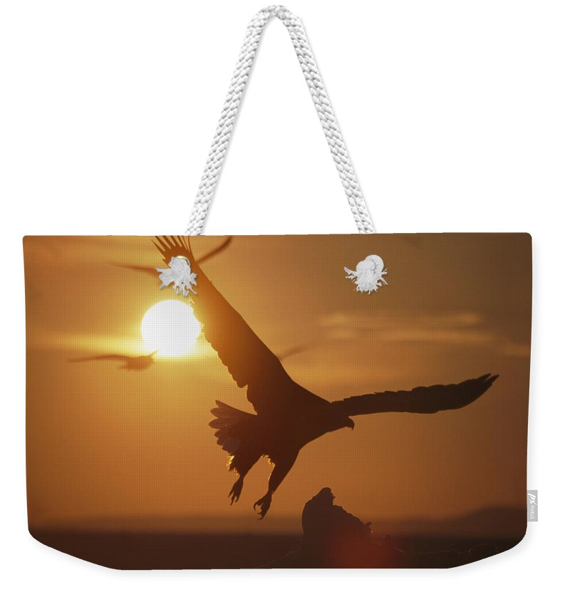Sun Weekender Tote Bag featuring the photograph A White-tailed Eagle In Flight by Tim Laman