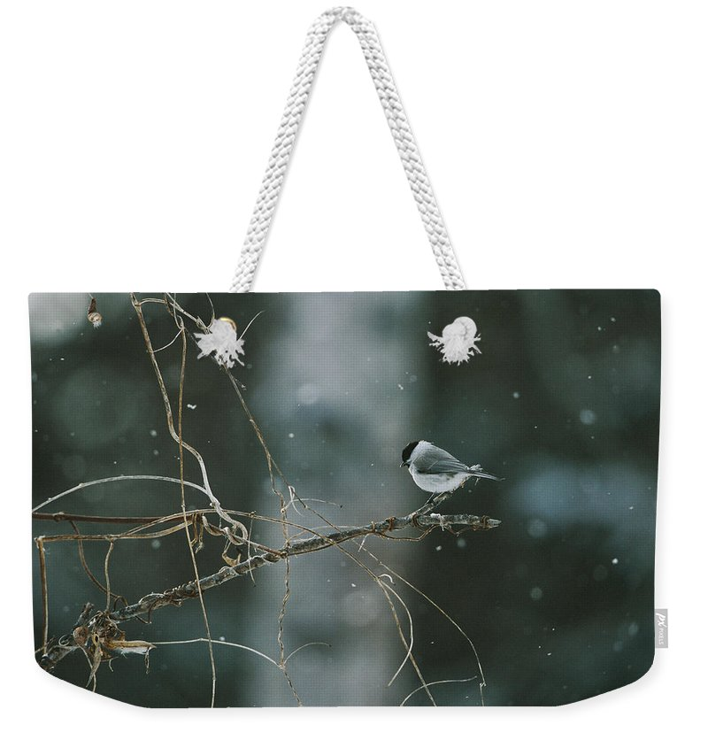 Asia Weekender Tote Bag featuring the photograph A Willow Tit Parus Montanus Perches by Tim Laman