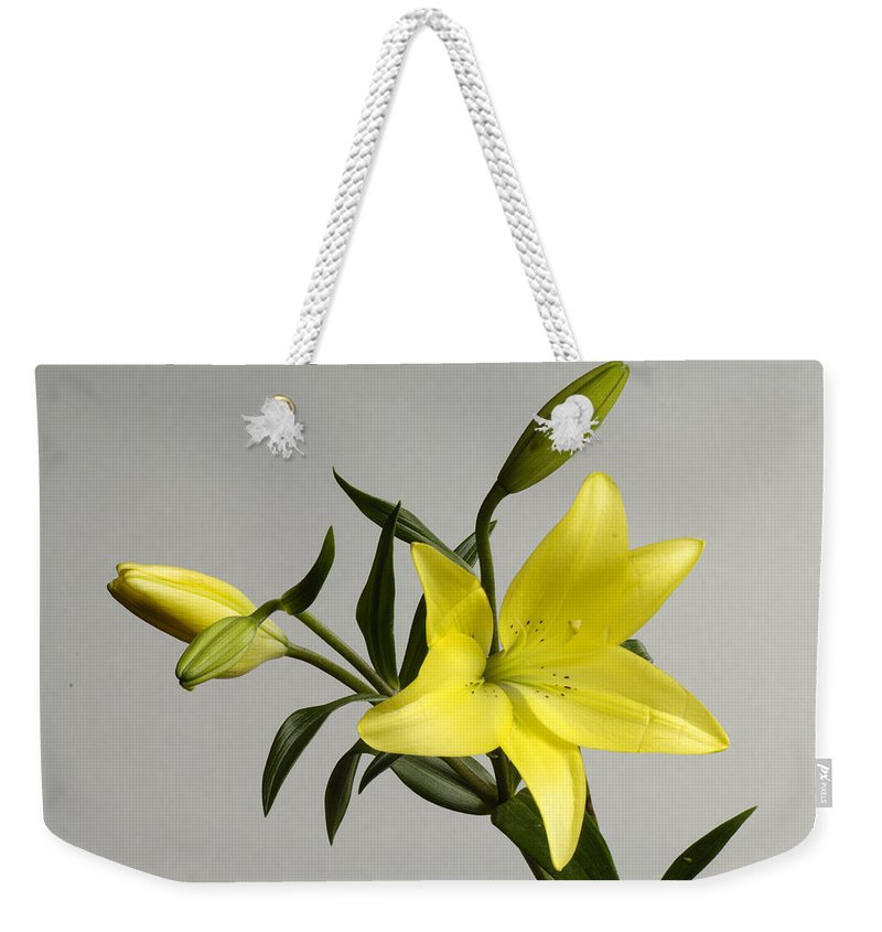 Photography Weekender Tote Bag featuring the photograph A Yellow Lily Lilium Canadense by Joel Sartore