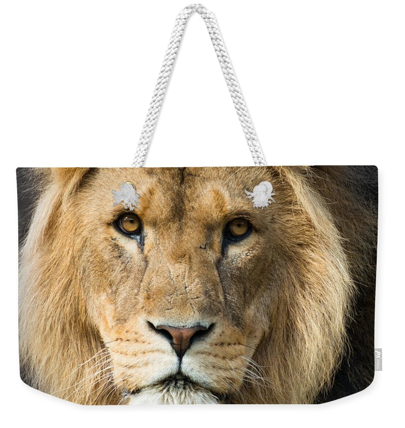 Lion Weekender Tote Bag featuring the photograph African Lion by Andrew Michael