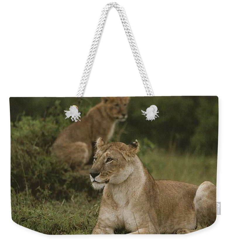 Panthera Leo Weekender Tote Bag featuring the photograph African Lionesses In Masai Mara by Anne Keiser