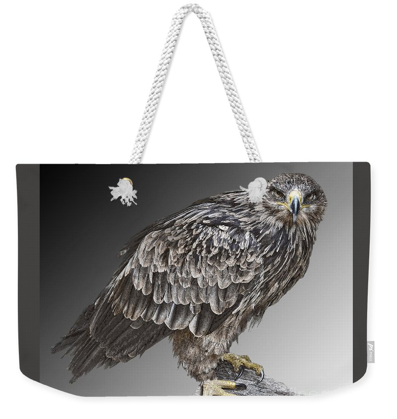Bird Of Prey Weekender Tote Bag featuring the photograph African Tawny Eagle by Sheila Laurens