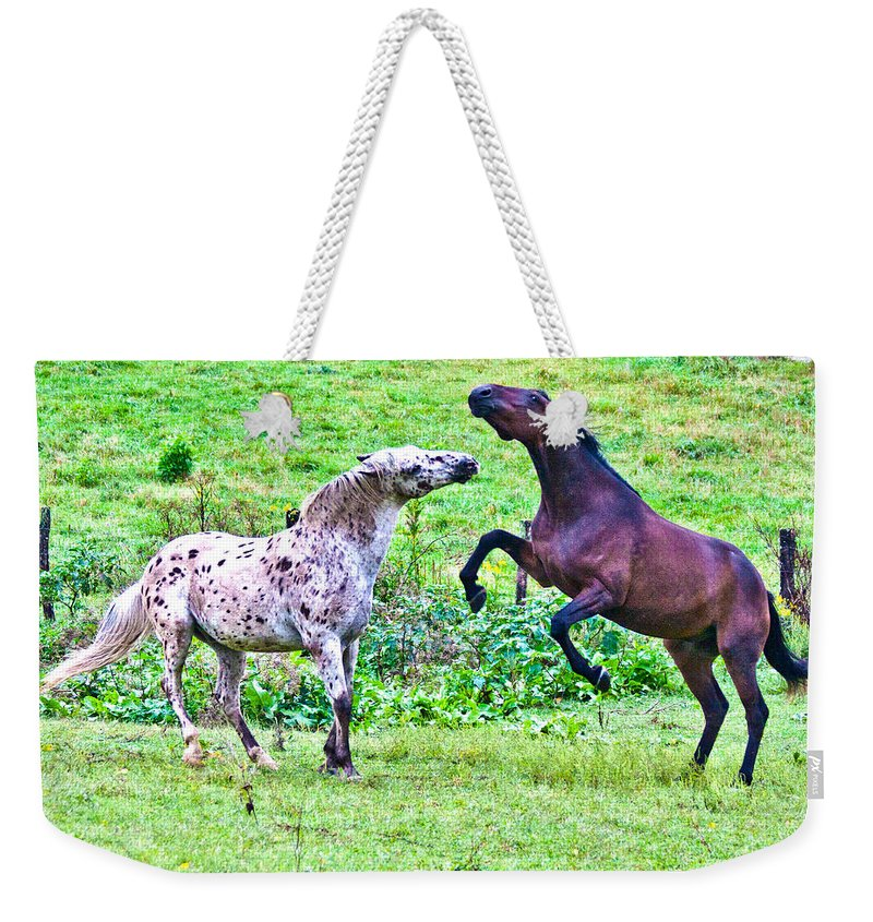 Horses Weekender Tote Bag featuring the photograph After Working by Betsy Knapp