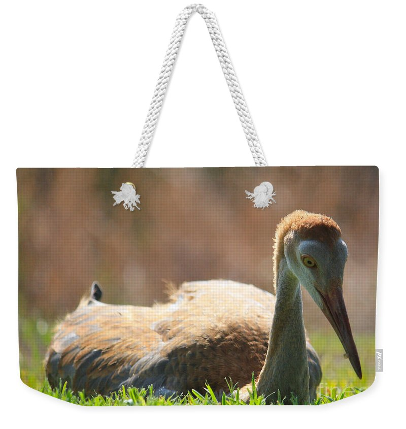 Resting Weekender Tote Bag featuring the photograph Afternoon Reprieve by Carol Groenen