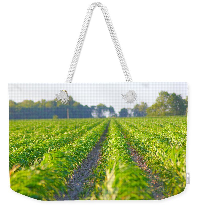 Crop Weekender Tote Bag featuring the photograph Agriculture- Corn 1 by Karen Wagner