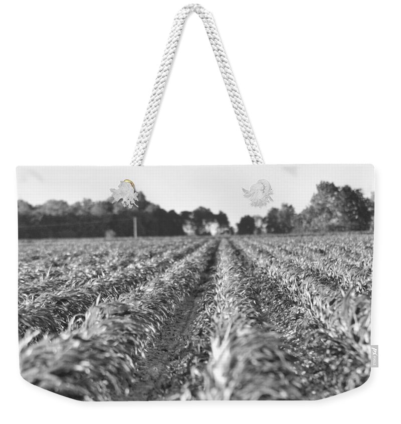 Land Weekender Tote Bag featuring the photograph Agriculture- Corn 2 by Karen Wagner