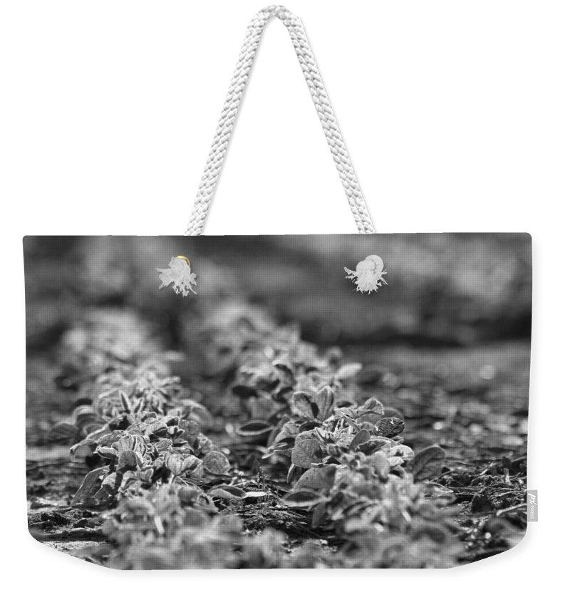 Harvest Weekender Tote Bag featuring the photograph Agriculture- Soybeans 2 by Karen Wagner