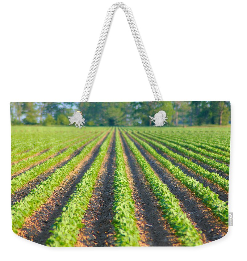 Soybeans Weekender Tote Bag featuring the photograph Agriculture-soybeans 5 by Karen Wagner
