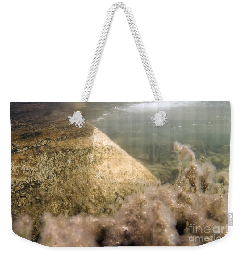 Algae Weekender Tote Bag featuring the photograph Algae In A Frozen Pond by Ted Kinsman