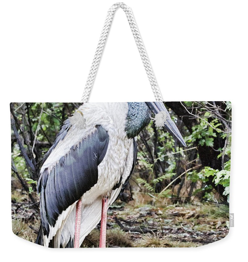 Corroboree Billabong Weekender Tote Bag featuring the photograph All Dressed Up... by Douglas Barnard