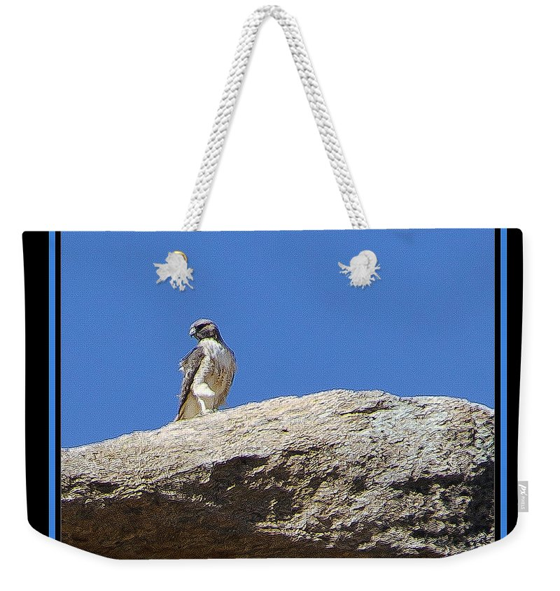 Bird Weekender Tote Bag featuring the photograph All Seeing by Larry White