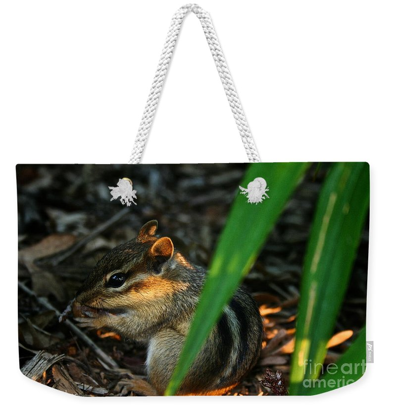 Outdoors Weekender Tote Bag featuring the photograph Alvin by Susan Herber